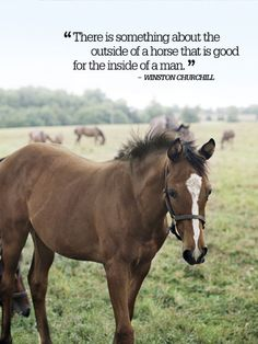 """There is something about the outside of a horse that is good for the inside of a man."""