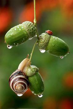 Beautiful Photos of Snails -- captured using a macro lens by talented Ukrainian photographer Vyacheslav Mishchenko.
