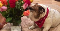 #World #News  Thoughtful dad sends flowers not to his wife, but to his dog  #StopRussianAggression #lbloggers @thebloggerspost