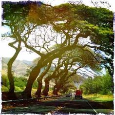 driving into Lahaina Maui....I've been on this road so many times