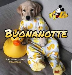 I Love Dogs, Labrador, Snoopy, Fictional Characters, Relax, Google, Messages, Night, Gold