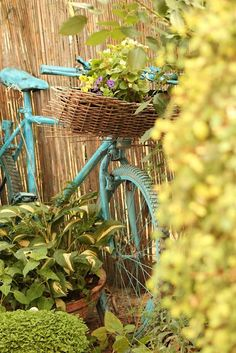 Use an old bicycle with a basket to add a little spice to your garden! Bicycle Basket, Old Bicycle, Bicycle Art, Paint Bike, Bicycle Painting, Bike Planter, Love Garden, Garden Features, Vintage Bikes