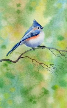 TUFTED TITMOUSE watercolor bird painting by Barbara Fox, painting by artist Barbara Fox