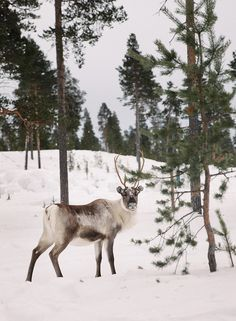 Lapland snow dream with a toddler