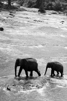 .. elephant walk ..