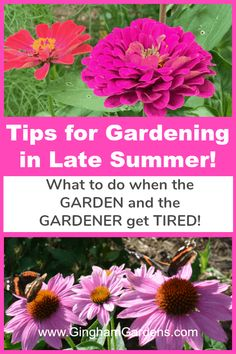 Enjoy a home garden tour with lots of flower garden ideas. Also includes some really great Tips for Gardening in Late Summer and how to keep your gardens looking good in the toughest gardening months. Flower Garden Pictures, Flowers Garden, Indoor Flowers, Flower Gardening, Gardening For Beginners, Gardening Tips, Indoor Gardening, Organic Gardening, Porches