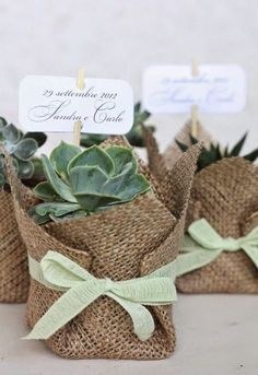 Suculentas: Un souvenir para toda la vida . Wedding Gifts For Guests, Wedding Favors Cheap, Wedding Favours, Diy Wedding, Wedding Flowers, Party Favors, Homemade Wedding Favors, Green Wedding, Wedding Ideas