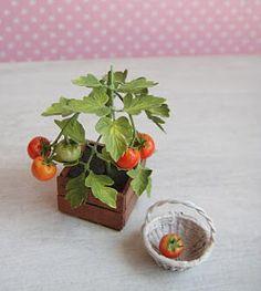 Tomatoes by Masahiro Mahara. - My Dollhouse Days: September 2010 Miniature Plants, Miniature Food, Miniature Dolls, Flowers For Mom, Clay Flowers, Polymer Clay Miniatures, Dollhouse Miniatures, Biscuit, Mini Plants