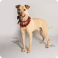 Adopt A Pet :: KENNEL 25 - Corona, CA City of Corona Animal Services & Shelter 1330 Magnolia Avenue. Corona, CA 92879 (951) 736-2309 Fax: (951) 278-4405 E-mail: michelle.gallina-martin@ci.corona.ca.us