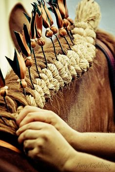 braiding a mane. that looks AWESOME it looks like one of these braids you do on Clydesdales when they're in a parade pulling a cart