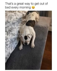 Funny Dog Videos, Funny Animal Memes, Funny Animal Pictures, Cute Funny Dogs, Cute Funny Animals, Cute Animal Videos, Cute Little Animals, Dog Love, Animals And Pets