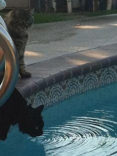 pool and the kitties