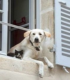 Hangin' out, literally Cute Cats And Dogs, I Love Cats, Animals And Pets, Cats And Kittens, Baby Animals, Funny Animals, Cute Animals, Sweet Dogs, Tier Fotos