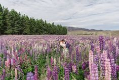 An epic Lake Tekapo wedding, surrounded by mountain views and lupins at the height of spring! So many colourful summer blooms created the backdrop for so many bridal portraits! Lake Tekapo, Anna, Bridal Portraits, Mountain View, Auckland, Bride Groom, Summer Wedding, In The Heights, Backdrops