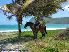 Ride to the beach near Vieux-Fort in St.Lucia