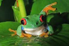 cute frogs - Google Search
