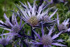 COLOURS, FLOWERS, MACRO, FLOWERING, ANNUALS, SELECTIVE, FOCUS, TIFUK2612850