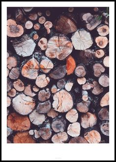 Tree Rings - Shop this print at Poster Store