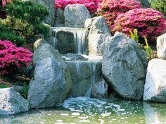 cascade bassin de jardin avec des rochers déco de plantes