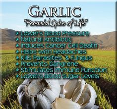 Garlic has anti cancer benefits. There are definitely anti-cancer benefits and have been known to cure a lot more than just colin cancer. Some individuals even goes as far to say it garlic, in high doses, can treat terminal cancers. Garlic Pills Benefits, Garlic Health Benefits, Garlic Supplements, Natural Kitchen, Natural Antibiotics, Lower Blood Sugar, Lower Blood Pressure, Medical Prescription