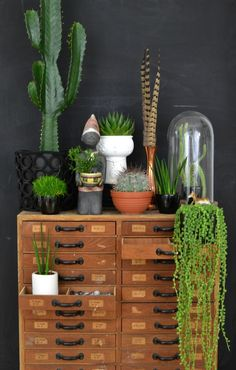 look! pimp your room: Urban Jungle Bloggers: My Plant Gang