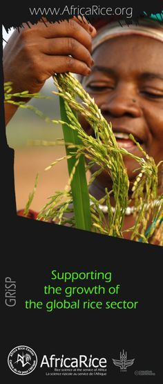 Global Rice Science Partnership (GRiSP) Themes Theme 6: Supporting the growth of the global rice sector Photo, Poster Design : R.Raman, AfricaRice