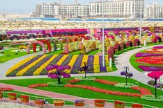 "All the people want to go to heaven or paradise after they die. Then you should understand the word ""Heaven or paradise"" which, based on the bible, means colorful garden. Then you can go now to see the paradise of on earth. Have a visit to Dubai to see the Miracle Garden which open form …"