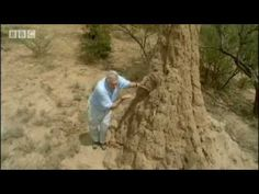Termite World - Life in the Undergrowth - BBC Attenborough    South African termites have actually developed a system of underground agriculture, and have perfected the structure of their mounds in such a way that they allow air flow to ventilate the mounds.     I remember watching this a year or so ago and finding it absolutely fascinating. I watched it again today, and was equally blown away.