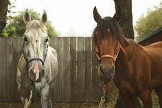 Horses ... How to Write a Business Plan for an Equine Facility. #entrepreneur #homebiz