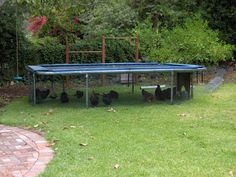Chicken yard under a trampoline!! Connected to the chicken coop via a chicken tunnel.  How smart!  The frame is already created for you.   All you need to do is cage them in.  SOOOO going to do this.