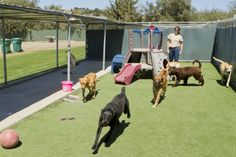Just as some people don't thrive at a packed party, a daycare setting isn't right for all dogs. If your dog was asked not to return to a daycare facility, consider these exercise options. Dog Kennel Panels, Dog Kennel Cover, Diy Dog Kennel, Dog Boarding Kennels, Pet Boarding, Obedience School For Dogs, Indoor Dog Park, Cheap Dog Kennels, Pets