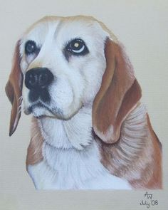 Beagle dog drawing by Anne Wassell www.annewassellart.com  Copyright