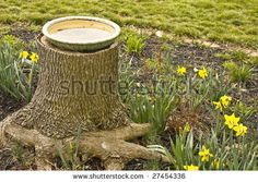 What to do with an old tree stump...