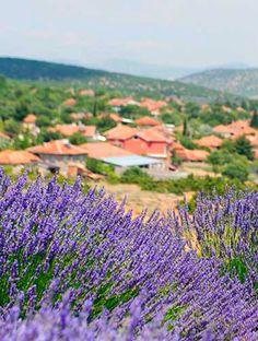Isparta Kuyucak Köyü Lavanta Kokuyor