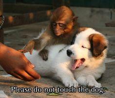 """Ples doo nawt touch theh doughg."""
