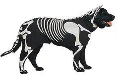 Disfraces para Mascotas en Halloween - Disfraz de Esqueleto para perros