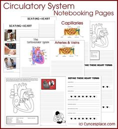 Teach your kids about their circulatory system with these FREE notebooking pages!