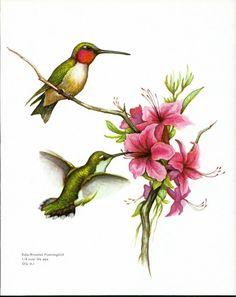Vintage Bird Hummingbird Illustration