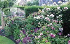 Other Rose Gardens - David Austin Roses