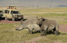 Choose #TanzaniaBudgetSafari is superb vacation option for you, especially because the country has so much natural beauty and adventure to offers. Know more @ https://www.northernmasailandsafaris.com/tours-safaris-2/