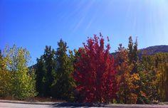 Changing Leaves in Oak Glen (California Travel)