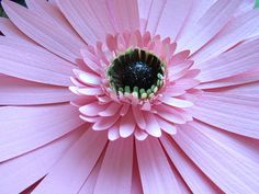 Giant paper gerbera daisy for your wall! Wall flower taxidermy ;)