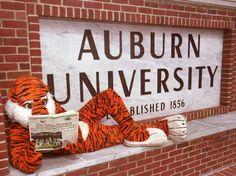 It's Aubie! #auburn #au #tigers