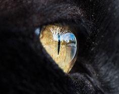 photo oeil de chat
