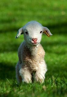 little lamb...so adorable!!!
