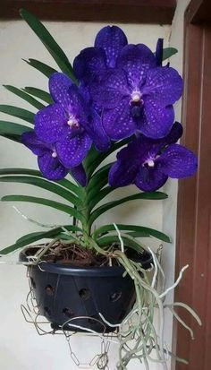 orchideák: 4 thousand results found on Yandex. Rare Orchids, Rare Flowers, Exotic Flowers, Tropical Flowers, Amazing Flowers, Purple Flowers, Beautiful Flowers, Orchids Garden, Orchid Plants