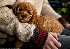 30 datos curiosos acerca de los perros  ¡Puedes reducir tu presión arterial al simplemente acariciar a tu cachorro!