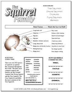 13 Best Squirrel's for Kids images | Squirrel, Fall ...