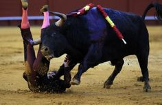 Spanish banderillero Luis Garcia 'Nino de Leganes' is gored by a bull during a bullfight at The Maestranza bullring in the Andalusian capital of Seville, southern Spain March 31, 2013. REUTERS-Marcelo del Pozo
