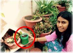 14) #GardenChallenge  My team member, Sakshee, planted lemon seeds in a used detergent container. :) #Reuse #SustainableGardening